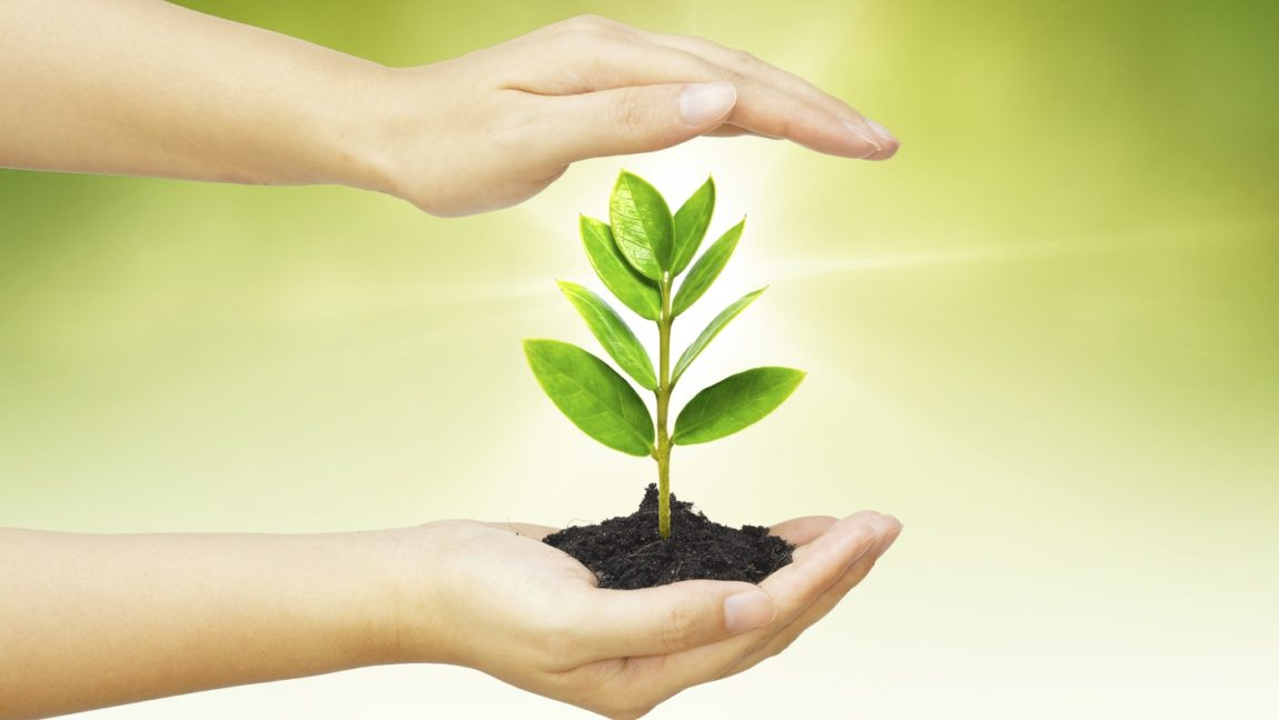 Biodegradabilitatea