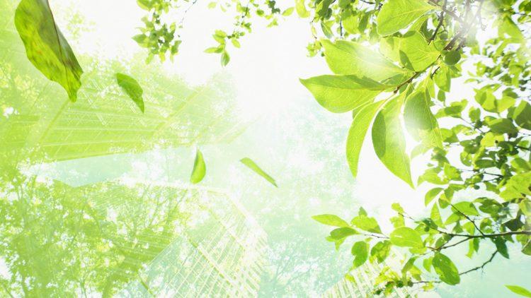 Beneficiile de mediu ale utilizării materialelor biodegradabile și compostabile